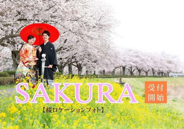 桜2年.jpgのサムネイル画像
