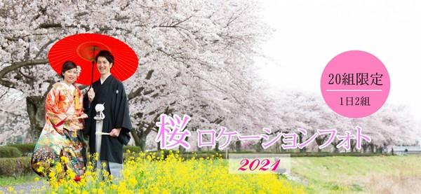 3年桜ロケN.jpg